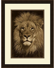 Amanti Art African Lion Male Portrait, Native To Africa - Sepia  Framed Art Print
