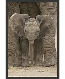 Amanti Art Big Ears - Baby Elephant- Framed Art Print