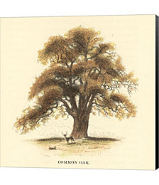 Common Oak by Samuel Williams Canvas Art
