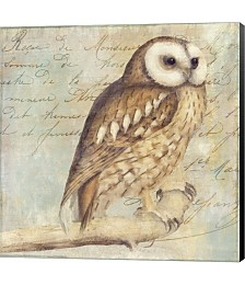 White-Faced Owl by Color Bakery Canvas Art