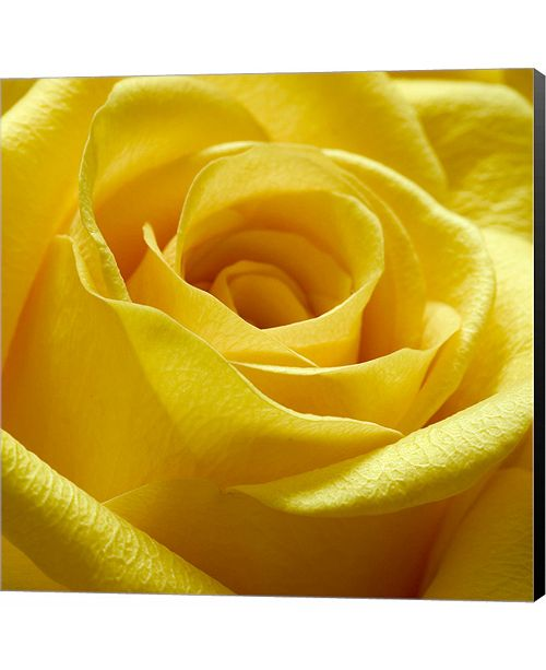 Metaverse Yellow Rose by PhotoINC Studio Canvas Art