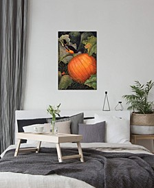 """Oriole & Pumpkin"" by Marcia Matcham Gallery-Wrapped Canvas Print"