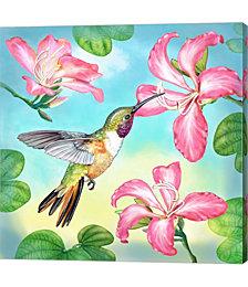 Bahama Woodstar in Orchid Tree by Rosiland Solomon Canvas Art