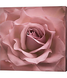 Misty Rose Pink Rose by Cora Niele Canvas Art