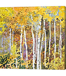 Autumn Birches III by Sharon Pitts Canvas Art