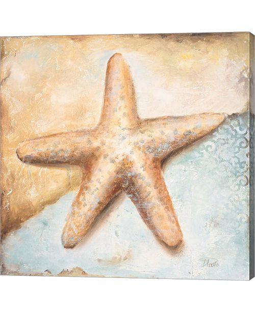 Metaverse Seashell Collec by Patricia Pinto