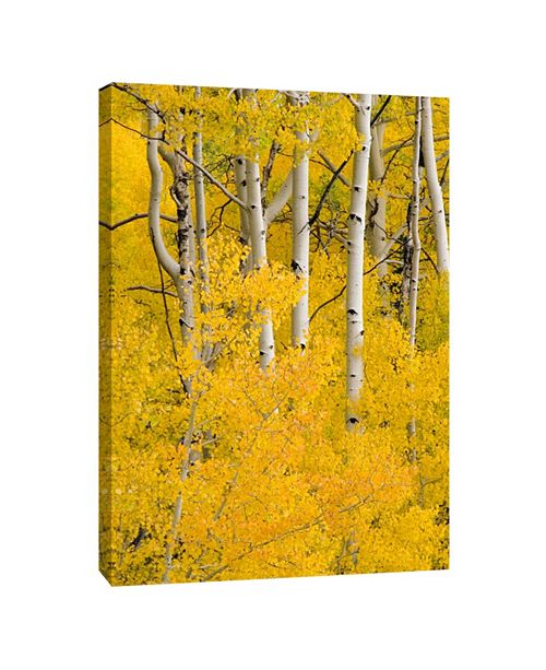 PTM Images 6 Decorative Canvas Wall Art