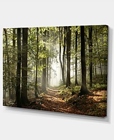 """Designart Green Fall Forest With Sun Rays Photography Canvas Print - 32"""" X 16"""""""