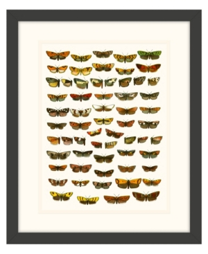 Butterfly Charts I Framed Giclee Wall Art - 15