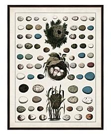 """Aerie II Framed Giclee Wall Art - 36"""" x 47"""" x 2"""""""