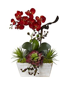 Seasonal Orchid and Succulent Garden with White Wash Planter