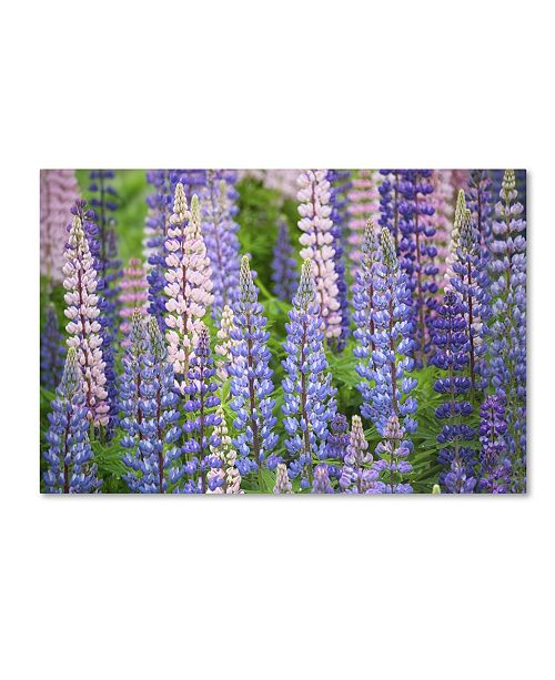 "Trademark Global Cora Niele 'Blue Pink Lupine Field' Canvas Art - 47"" x 30"" x 2"""