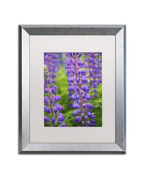 "Trademark Global Cora Niele 'Blue Violet Lupine Flower' Matted Framed Art - 20"" x 16"" x 0.5"""