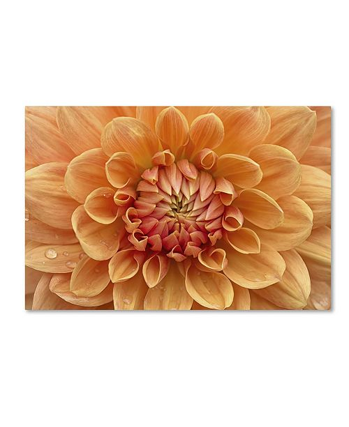 "Trademark Global Cora Niele 'Orange Dahlia' Canvas Art - 24"" x 16"" x 2"""