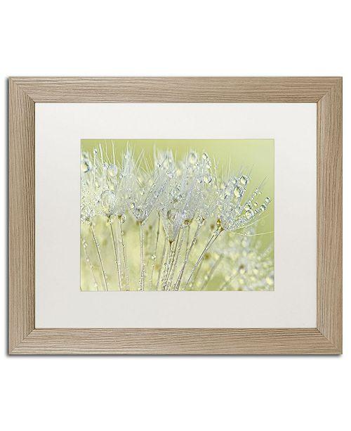 "Trademark Global Cora Niele 'Dandelion Dew I' Matted Framed Art - 20"" x 16"" x 0.5"""