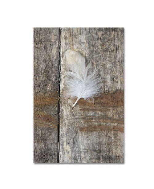 "Trademark Global Cora Niele 'Feather on Wood I' Canvas Art - 47"" x 30"" x 2"""