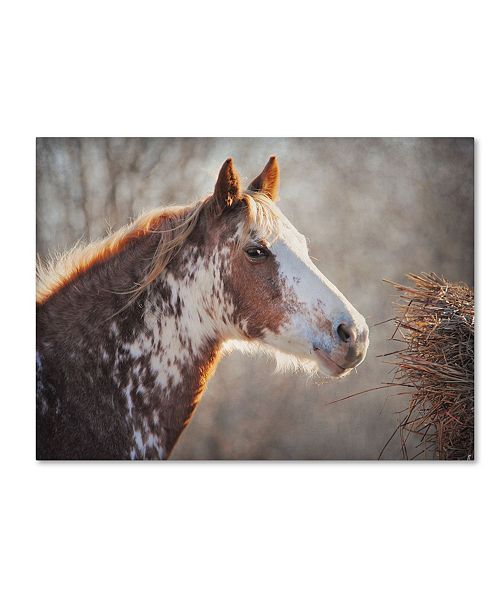 "Trademark Global Jai Johnson 'No Sharing Horse' Canvas Art - 19"" x 14"" x 2"""