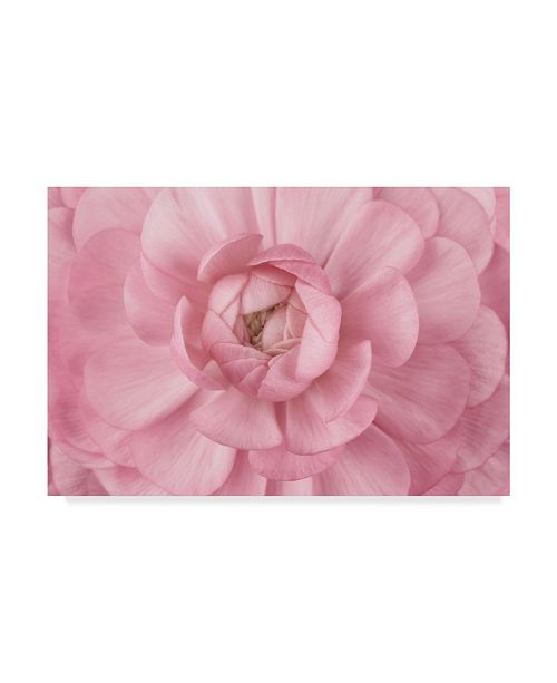 "Trademark Global Cora Niele 'Pink Flower Petals' Canvas Art - 47"" x 30"" x 2"""