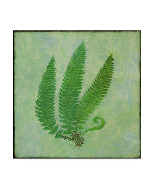 "Trademark Global Cora Niele 'Fern Series Vintage Ii' Canvas Art - 18"" x 18"" x 2"""