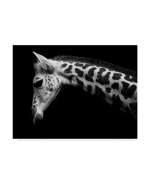 "Trademark Global David Williams 'Calf' Canvas Art - 19"" x 2"" x 14"""