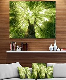 "Designart 'Sunlight Peeking Through Green Tree' Landscape Metal Wall Art - 40"" X 30"""