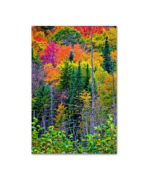 "Trademark Global The Lieberman Collection 'Tall Trees' Canvas Art - 32"" x 22"" x 2"""