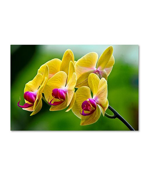"""Trademark Global The Lieberman Collection 'Colorful Flowers' Canvas Art - 32"""" x 22"""" x 2"""""""
