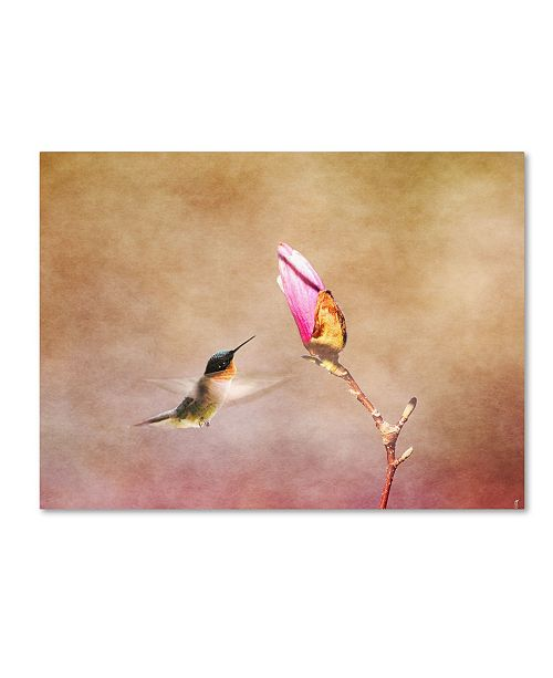 "Trademark Global Jai Johnson 'Temptation Hummingbird' Canvas Art - 19"" x 14"" x 2"""