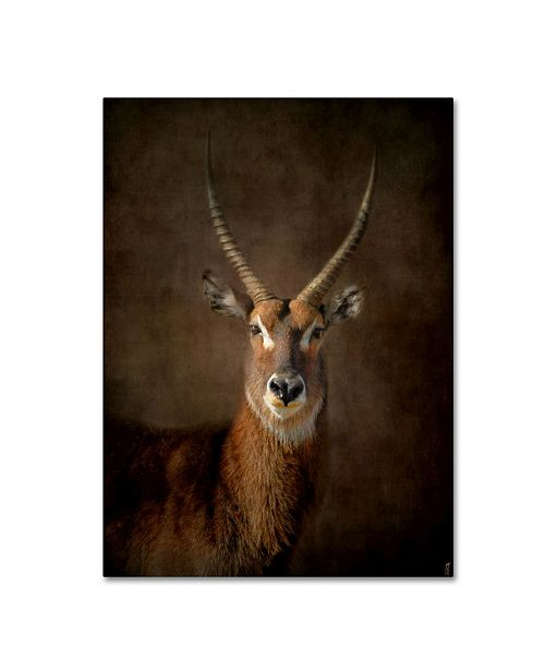 "Trademark Global Jai Johnson 'Waterbuck Antelope' Canvas Art - 47"" x 35"" x 2"""