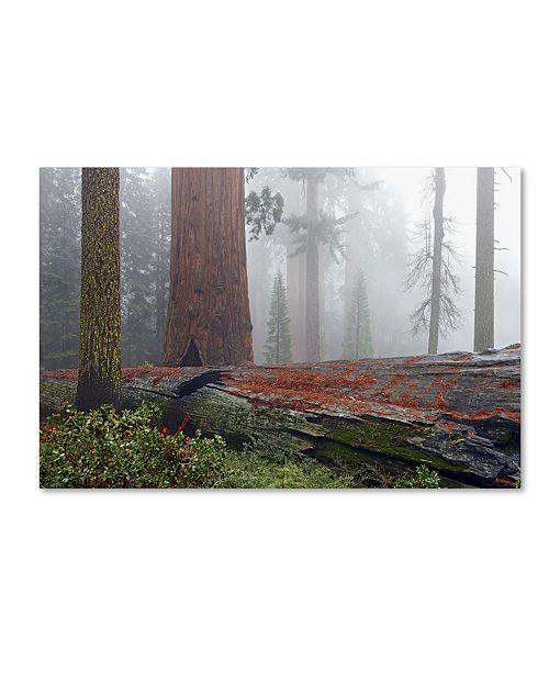 "Trademark Global Mike Jones Photo 'Sequoia Fallen Giant' Canvas Art - 47"" x 30"" x 2"""
