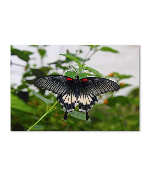 """Trademark Global Robert Harding Picture Library 'Butterfly 101' Canvas Art - 32"""" x 22"""" x 2"""""""