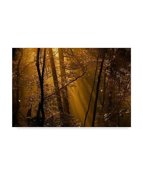 """Trademark Innovations Norbert Maier 'Orange Forest' Canvas Art - 47"""" x 2"""" x 30"""""""