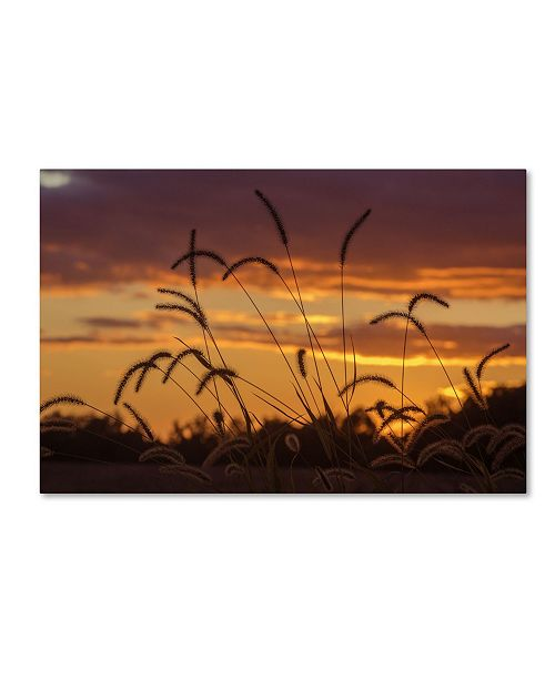 "Trademark Global Jason Shaffer 'Weeds' Canvas Art - 19"" x 12"""