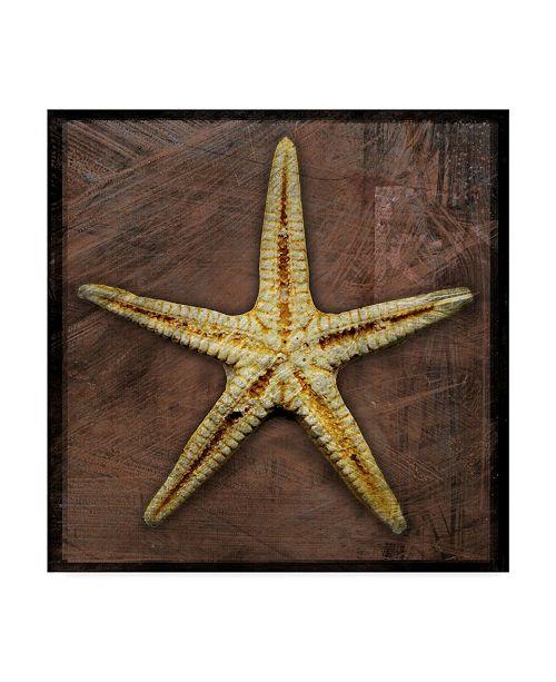 "Trademark Global John W. Golden 'Starfish' Canvas Art - 18"" x 18"""