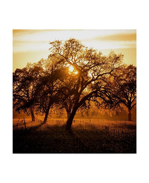 "Trademark Global Lance Kuehne 'Let There Be Light' Canvas Art - 18"" x 18"""