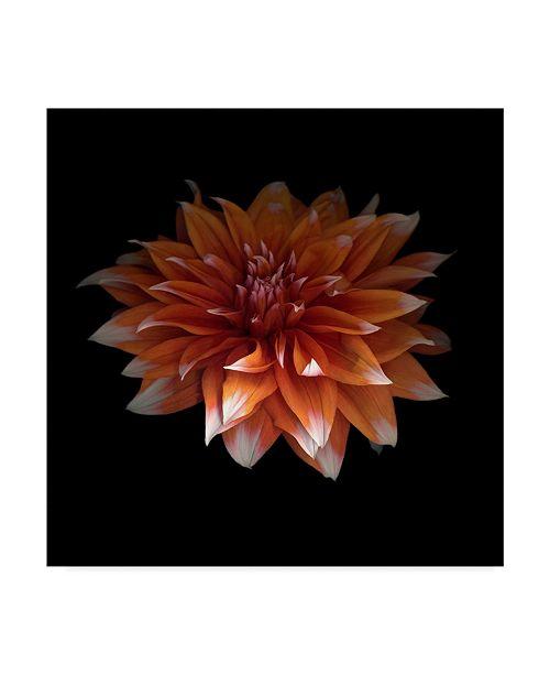 "Trademark Global Susan S. Barmon 'Perfect Dahlia' Canvas Art - 18"" x 18"""