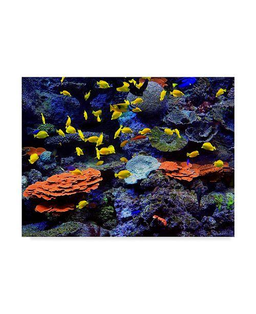 "Trademark Global J.D. Mcfarlan 'Reef Fish' Canvas Art - 24"" x 18"""
