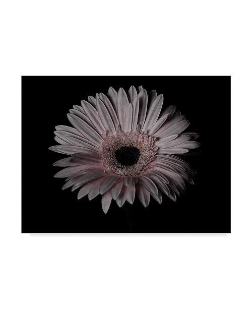 "Trademark Global Lori Hutchison 'Gerber Daisy Pink' Canvas Art - 19"" x 14"""