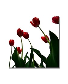 """Michelle Calkins 'Red Tulips from Bottom Up V' Canvas Art - 18"""" x 18"""""""