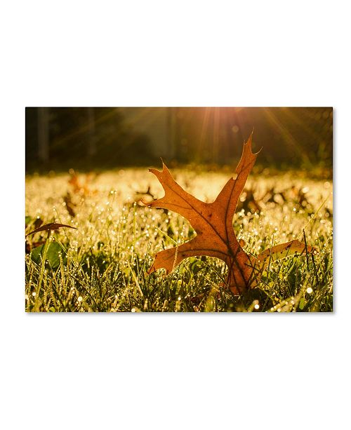 "Trademark Global PIPA Fine Art 'Fall Leaf in Morning Sun' Canvas Art - 30"" x 47"""
