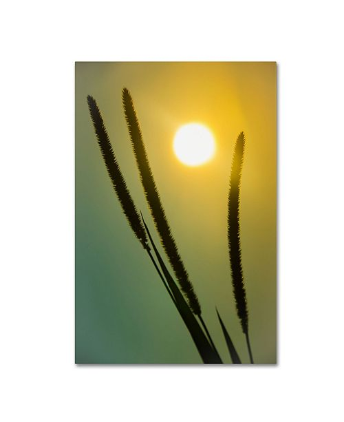 "Trademark Global PIPA Fine Art 'Silhouettes in Sunset' Canvas Art - 30"" x 47"""