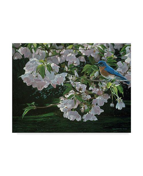 "Trademark Global Ron Parker 'Cherry Blossoms' Canvas Art - 24"" x 32"""