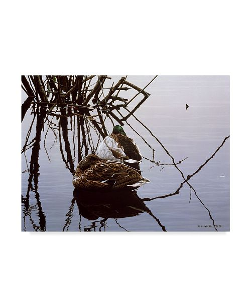 "Trademark Global Ron Parker 'Still Water Mallards' Canvas Art - 35"" x 47"""