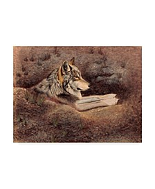 "Rusty Frentner 'Mexican Wolf' Canvas Art - 24"" x 32"""