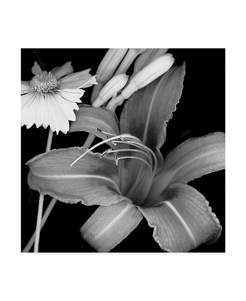 """Trademark Global Susan S. Barmon 'Day Lily And Coreopsis' Canvas Art - 35"""" x 35"""""""