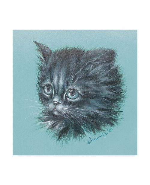 "Trademark Global Peggy Harris 'Black Kitten Portrait' Canvas Art - 35"" x 35"""