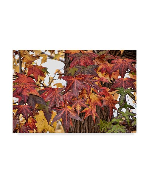 "Trademark Global Lori Hutchison 'Red Fall Leaves' Canvas Art - 47"" x 30"""