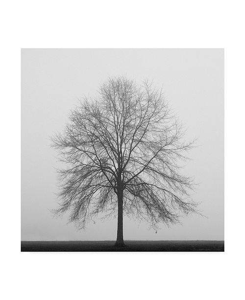 "Trademark Global Nicholas Bell Photography 'Winter Trio 3' Canvas Art - 24"" x 24"""