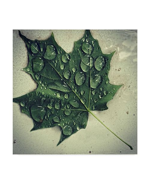 "Trademark Global Nina Marie 'Maple Drops' Canvas Art - 35"" x 35"""