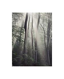 "Nicholas Bell Photography 'Woodland Sun' Canvas Art - 35"" x 47"""